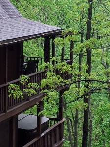 Bear Lodge is a Tree Fort in the Summer!