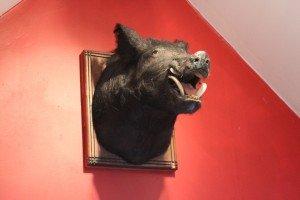 boar-bear-lodge-va